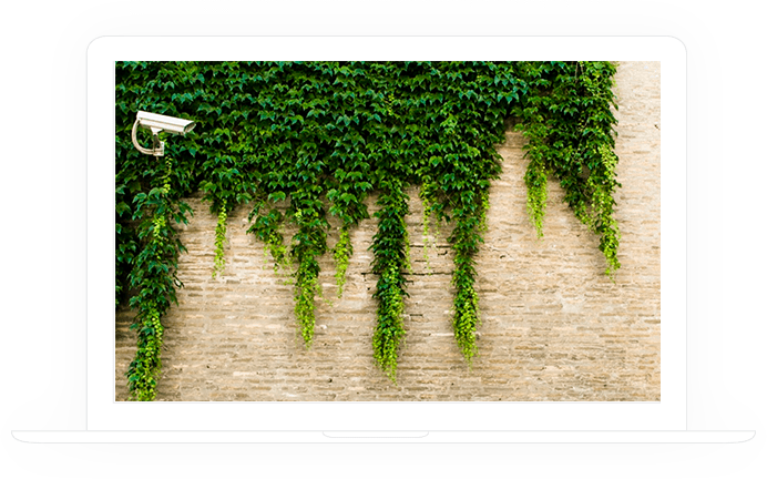 The camera on the wall with plants